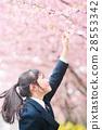 벚꽃, 고등학생, 고교생 28553342