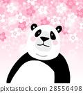 熊 熊猫 巨大的 28556498