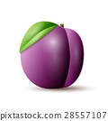 Plums vector icon. 28557107