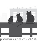 Cats on the roof 28559736
