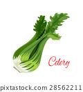芹菜 调味 矢量 28562211