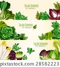 salad vegetable banner 28562223