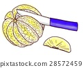 Grapefruit cut 5 28572459