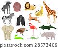 สัตว์,ภาพวาดมือ สัตว์,แอฟริกา 28573409
