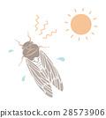 矢量 蝗蟲 蟬 28573906