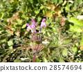 ดอกไม้,ฤดูหนาว,วัชพืช 28574694