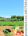 夏令時蔬 夏季蔬菜 菜地 28575091