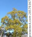 ฤดูหนาว,ท้องฟ้าเป็นสีฟ้า 28576367
