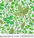 Seamless Pattern with Herbs 28580650