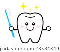 牙膏 牙齿 齿轮 28584349