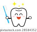 牙膏 牙齿 齿轮 28584352