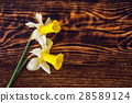 beautiful yellow narcissus on wooden background, 28589124