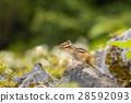 다람쥐 28592093