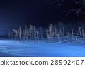 blue pond, aoiike, lit up 28592407