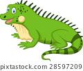 iguana, cartoon, vector 28597209