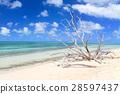푸른 하늘, 파란 하늘, 해변 28597437