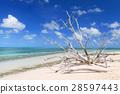 리조트, 해변, 비치 28597443