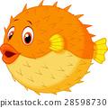 fish, puffer, puff 28598730