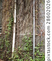 National Taiwan University campus tree vine wall 28602026