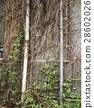 台大校園樹藤牆面 28602026