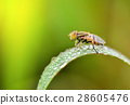 insect fly on on green leaf 28605476