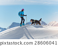 Girl on top of a mountain with skis and his dog 28606041