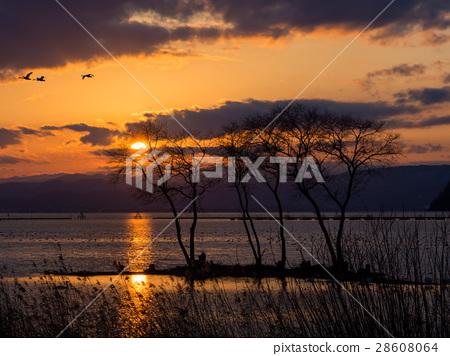 Lake shore sunset behind Lake Biwa 28608064
