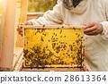 养蜂人 蜜蜂 蜂窝 28613364