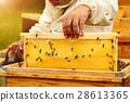 养蜂人 蜜蜂 蜂窝 28613365