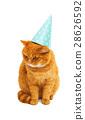 貓 貓咪 動物 28626592