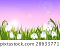 background, snowdrops, field 28633771