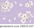 벚꽃 (퍼플) 28635107