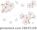 벚꽃 (화이트) 28635108