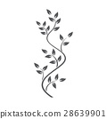 Natural ornamentation with ivy on white background 28639901