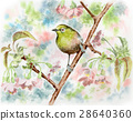 벚꽃 나무에 띄는 동박새 28640360