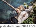 猴子 28641724