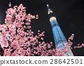 카와 벚꽃과 도쿄 스카이 트리 28642501