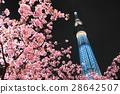 카와 벚꽃과 도쿄 스카이 트리 28642507