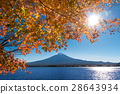 Mount Fuji with maple leaves 28643934