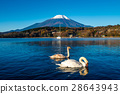 Mount Fuji and lake Yamanaka 28643943