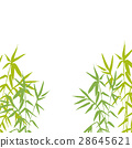 Bamboo plant isolated vector illustration 28645621