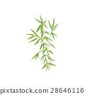 bamboo, branch, illustration 28646116