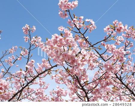 푸른, 가로수, 꽃 28649328