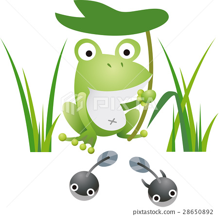 Frog 28650892