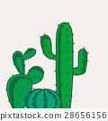 Cactus desert plants 28656156