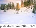 Sun rays through fir forest in winter 28656921
