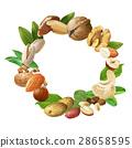 Vector illustration of nuts 28658595