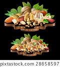 Vector illustration mix of different types nuts 28658597