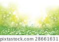 chamomile flower grass 28661631