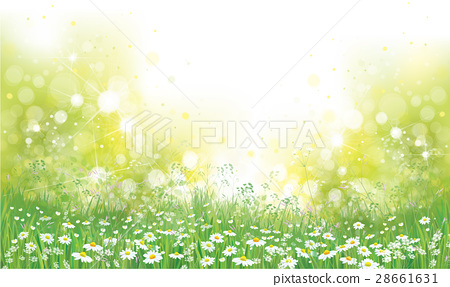 Vector summer nature  background. 28661631